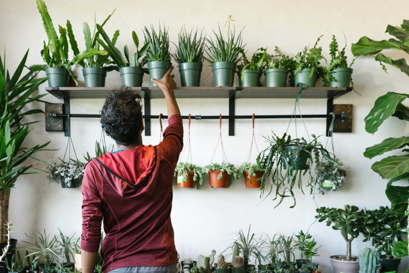 Man is photographed reaching for a plant on the shelf.