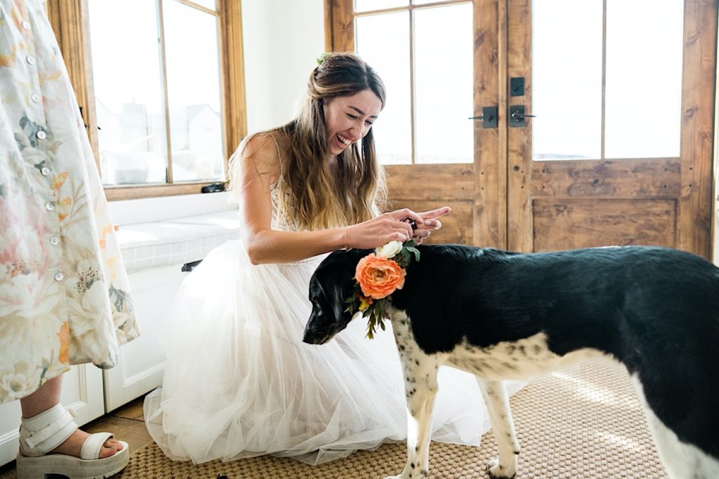 Bride kneeling down to put special floral collar on her dog.