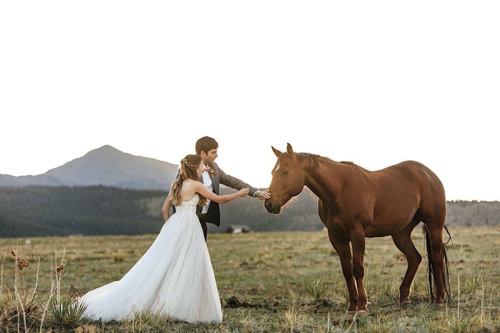 Bride and groom petting a horse on the ranch.