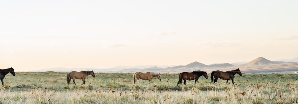 Panoramic of ranch horses.